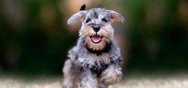 Camapaña de Mascotas Saludables