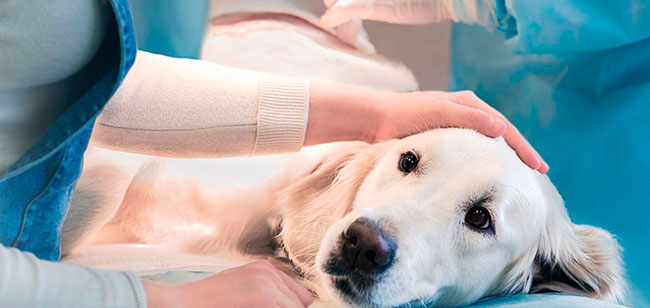 quimioterapia mascotas