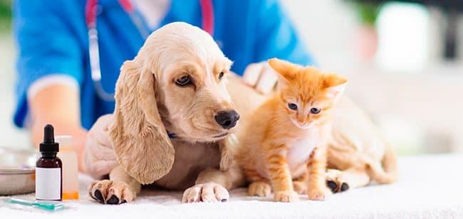 MSD perros y gatos